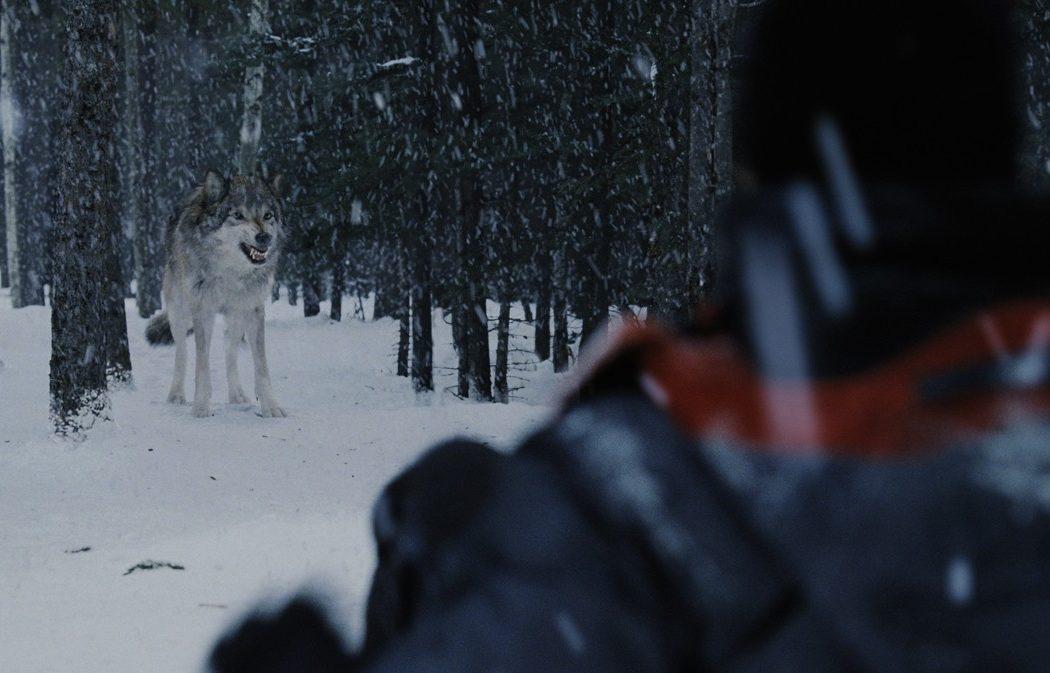 Wolf2_final