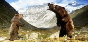 CNM Q01 l'ours