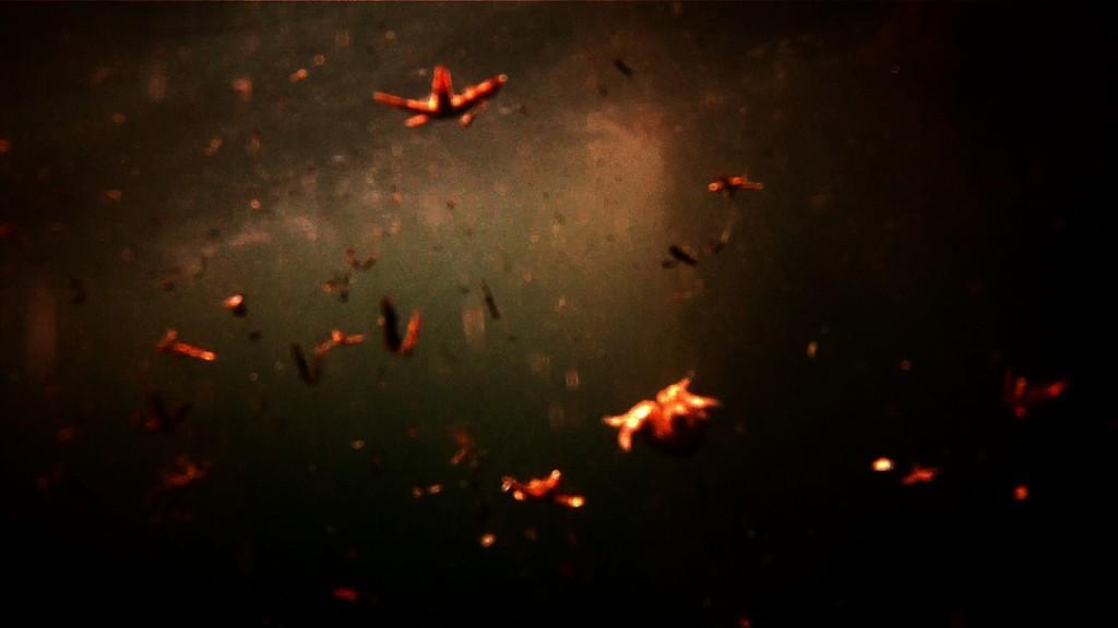 Leviathan étoiles