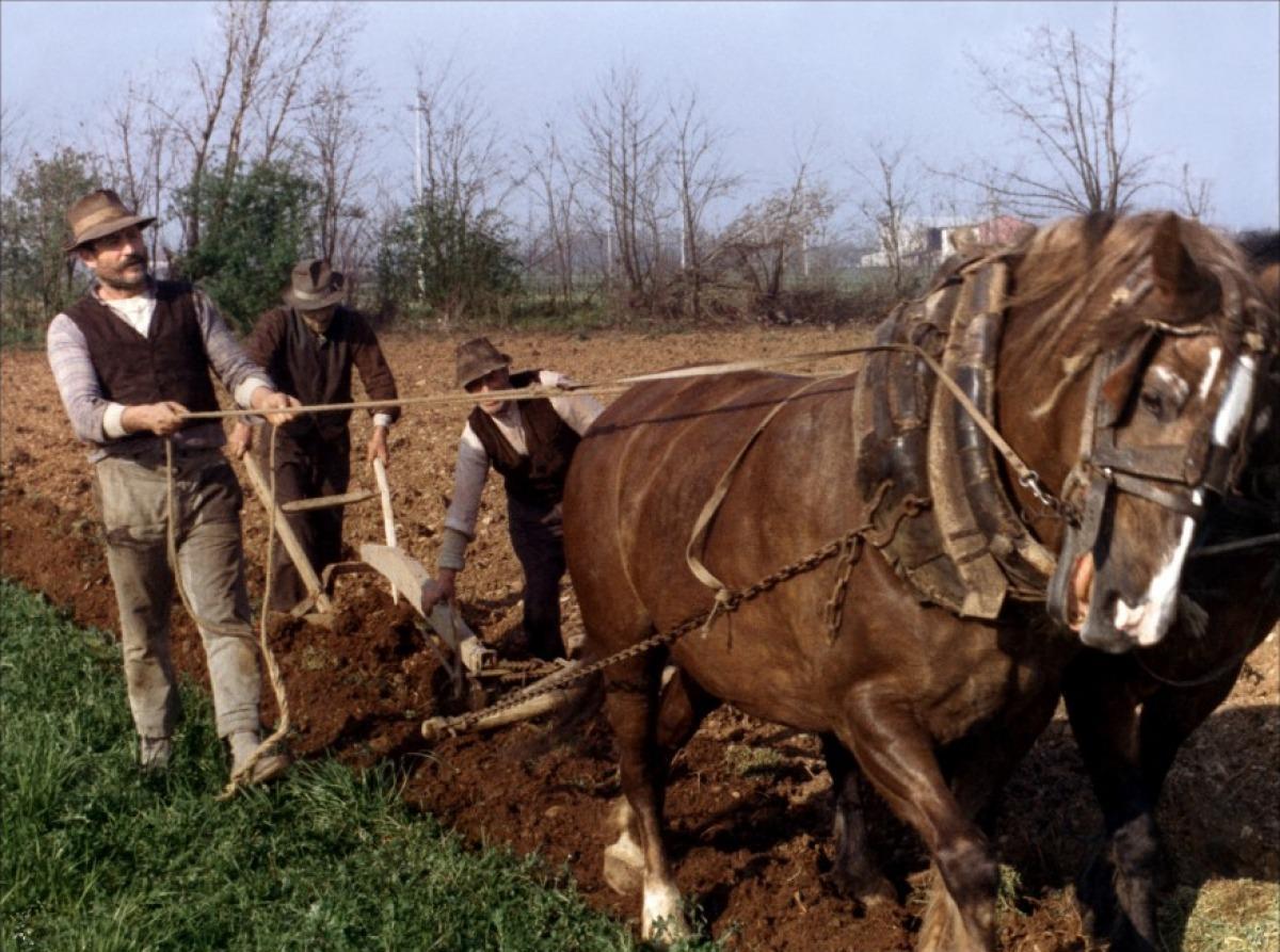 L'arbre aux sabots : Voyage en Italie rurale