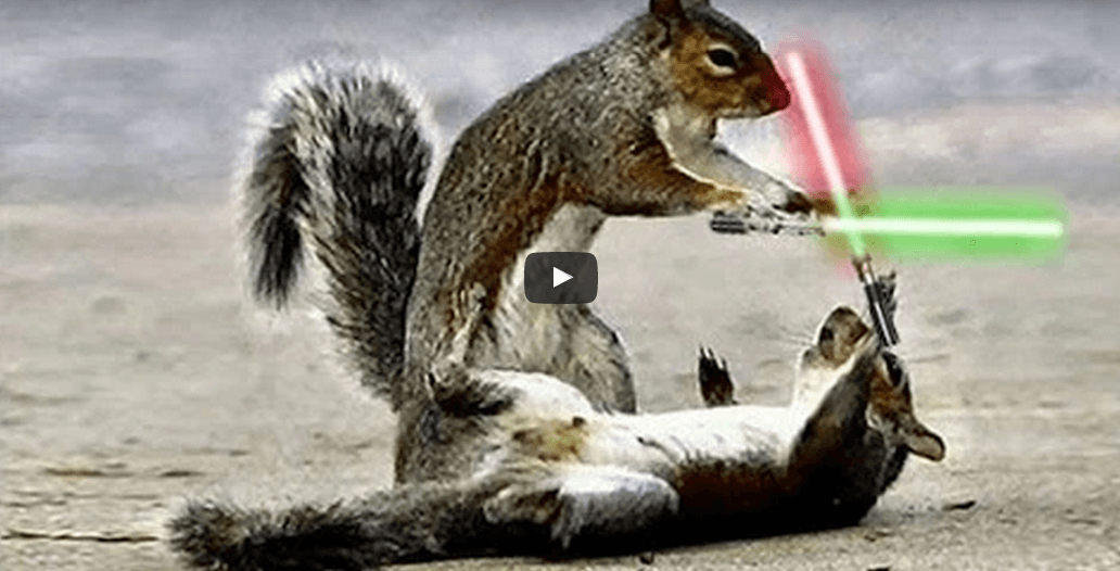 Les Chipmunks possédés par la Force