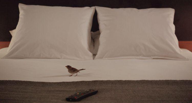 Bird People Cinematraque
